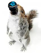 BrewDog-The-End-Of-History-cervejas-mais-alcoolicas
