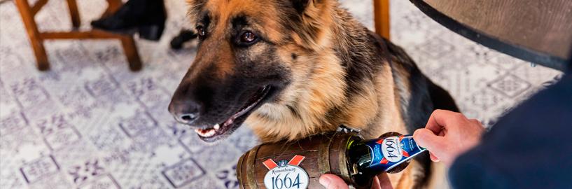Bar da Kronenbourg em Londres tem cachorros como garçons