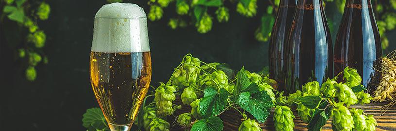 Sustentabilidade nas cervejarias: o equilíbrio entre produção e cuidado com o meio ambiente
