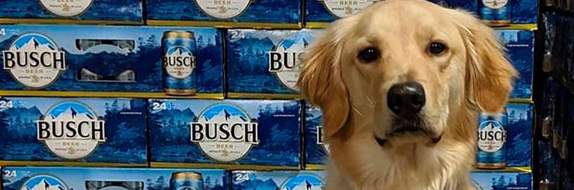 Campanha da Busch Beer oferece cerveja grátis para quem adotar cachorros abandonados